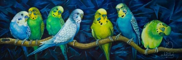 თუთიყუშები